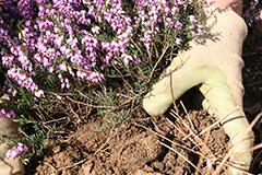 Título Profesional Básico en Agrojardinería y Composiciones Florales