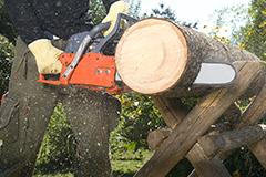Título Profesional Básico en Aprovechamientos Forestales
