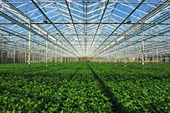 Técnico en Producción Agropecuaria